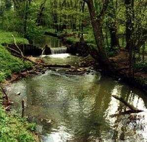 Rzeka Kołodziejka w rezerwacie Przekop